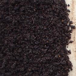 Kompostmask eisenia foetida