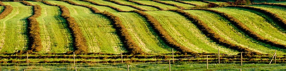 gmo grödor fördelar och nackdelar