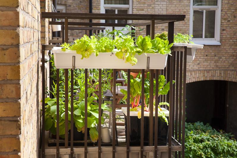 odla bär på balkong