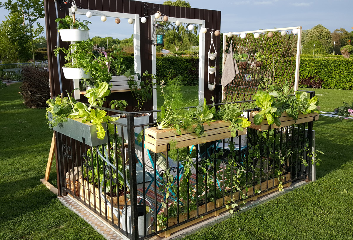 odla i växthus nybörjare