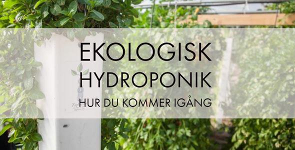 Ekologisk hydroponik - hur du kommer igång