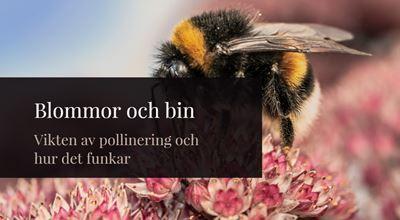 Föreläsning - Blommor och bin