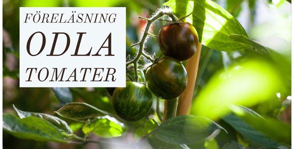 Föreläsning - Odla tomater