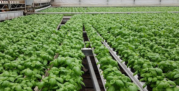 Hållbar odling - vad är bäst?
